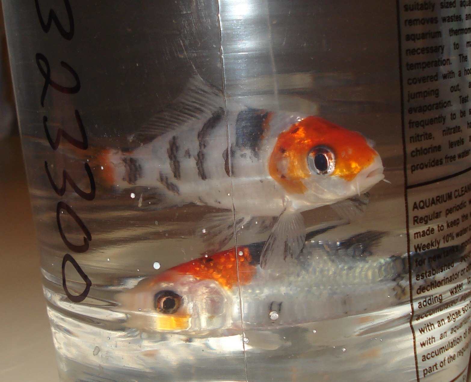 301 moved permanently for What to feed baby koi